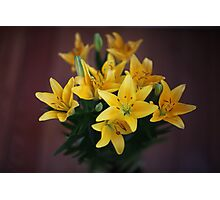 lily flowers on a black background  Photographic Print