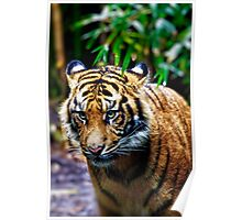 Tigeress Hunter. Poster
