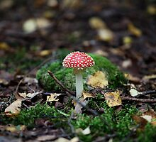 fungus agaric by mrivserg