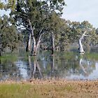AUSTRALIAN MALLEY FOREST, WETLANDS, AND WILD FLOWERS by Geoffrey Higges