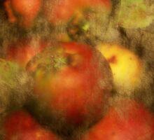 Somerset Apples Sticker
