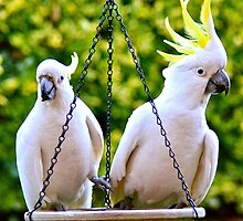 Cockatoos 1 by Alison Hill