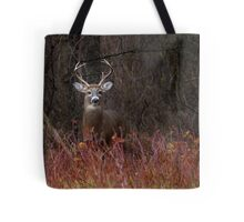 On alert - White-tailed Deer Tote Bag