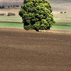 That Tree (#1) - Coal Valley, Tasmania by clickedbynic
