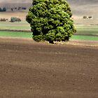 That Tree (#1) - Coal Valley, Tasmania by clickedbynic