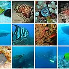 Underwater World calendar link by Rob Emery
