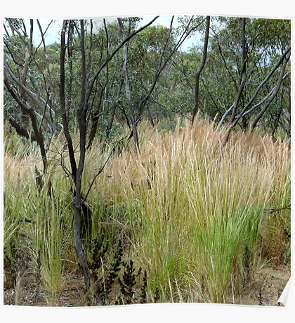 10. Mallee Forest and Wild Flowers Poster