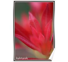 red in bloom Poster