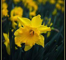It's Springtime!! by jodi payne