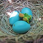 Robin's Nest May 29, 2009 by Ron Russell