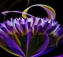 Purple Mum 1 by photoworksbyjd