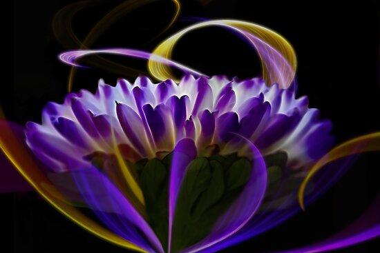 Purple Mum 1 by photoworksbyjd