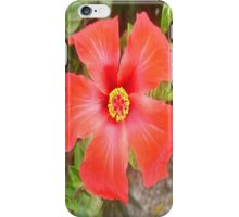 Head On Shot of a Red Tropical Hibiscus Flower iPhone Case/Skin