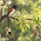 A Bird in the wild. by debjyotinayak