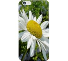 Close Up Common White Daisy With Garden  iPhone Case/Skin