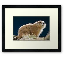 WINTER FUR Framed Print