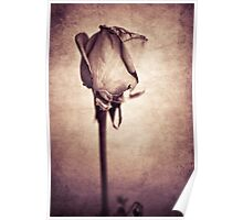 Solitaire Rose - Pink Poster