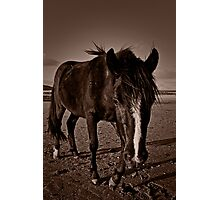Black Horse Photographic Print