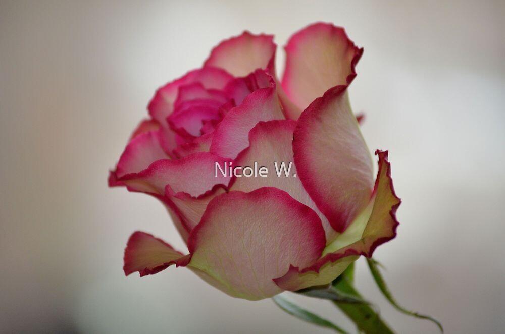 Rosebud by Nicole W.