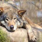...I need my nap...  by John44