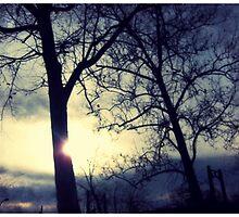 Sunlight by Sookie Sookie