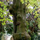 Strange Tree in the Cemetery by AnnDixon