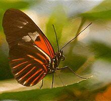 Butterfly by KathleenRinker