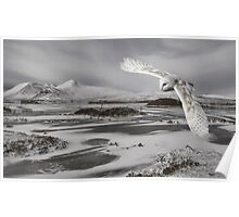 Owl flying over Rannoch Moor Poster