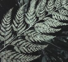 Silver Fern New Zealand Sticker