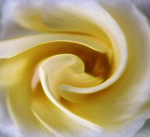 Swirled Rose by photoworksbyjd