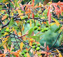 Little Green Apples by Asoka