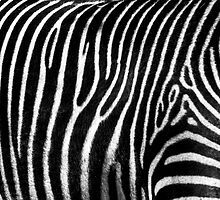 Zebra Pattern by Diego  Re