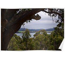 TASMAN PENINSULA ~ Glimpse at Safety Cove by tasmanianartist Poster