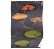 Autumn Lilies Poster