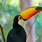 My first Toucan by strok