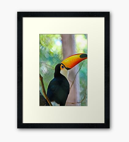My first Toucan Framed Print
