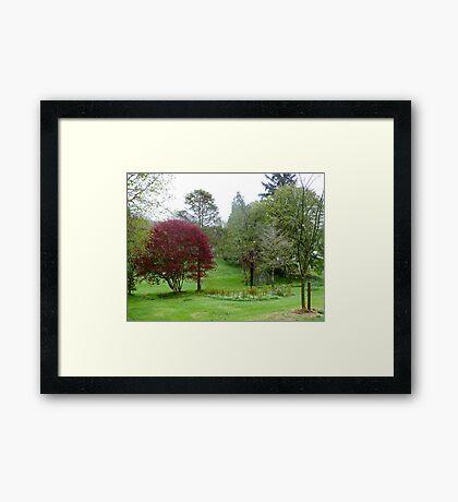Gardens Of Glebe House Framed Print