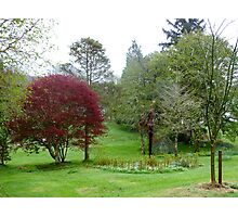 Gardens Of Glebe House Photographic Print