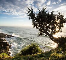 Pandanus Holding On - Skennar's Head by Daniel Rankmore