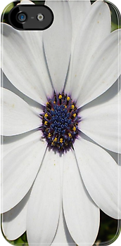 Blossoming White Osteospermum by taiche