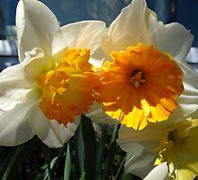 Glorious Daffodils by MarianBendeth