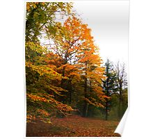 A scattering of leaves Poster