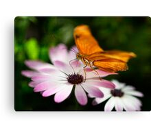 Julia Butterfly on a Daisy  Canvas Print