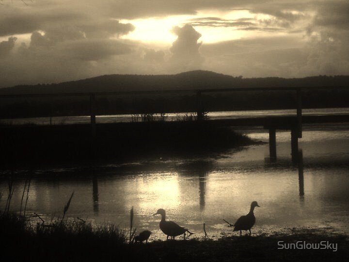 Duck family down by the Jetty by SunGlowSky