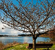 Olympia's East Bay Waterfront by Lynnette Peizer