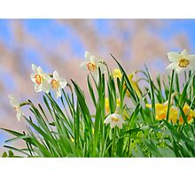 The brightness of the Spring Photographic Print