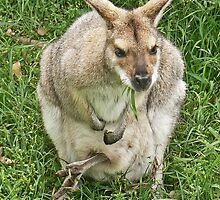 Mrs Wallaby by Graeme  Hyde