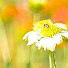 Bee's bed... by Kornrawiee