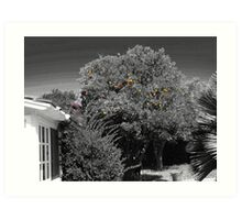 Gleaning for Oranges #1:Kathy in the tree Art Print