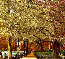 Springtime in Boston by LudaNayvelt